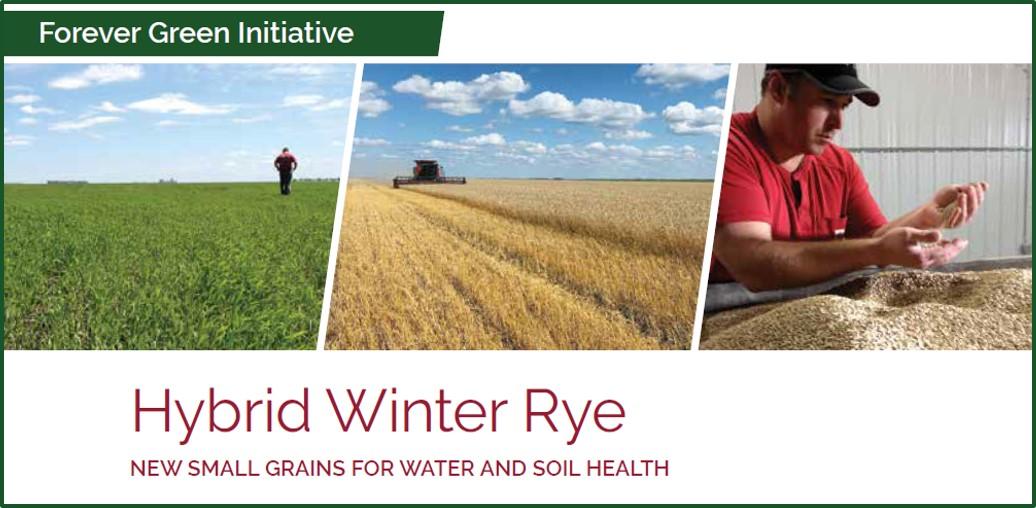 hybrid winter rye factsheet front page image