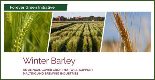 winter barley factsheet front page image