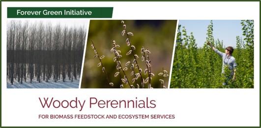 woody perennials factsheet front page image