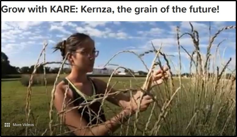 KARE-11 piece on Kernza