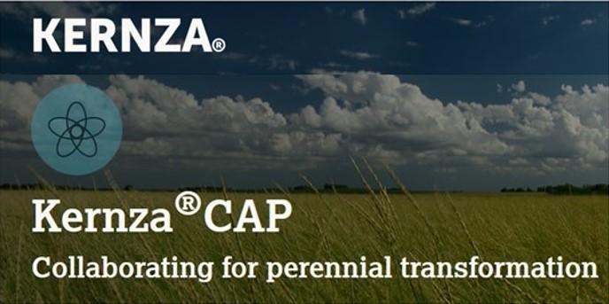Kernza Cap Project Website