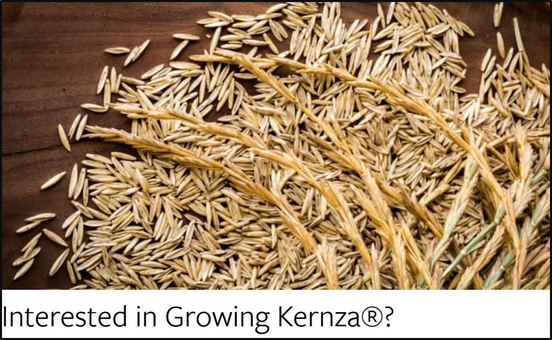 TLI growing Kernza page