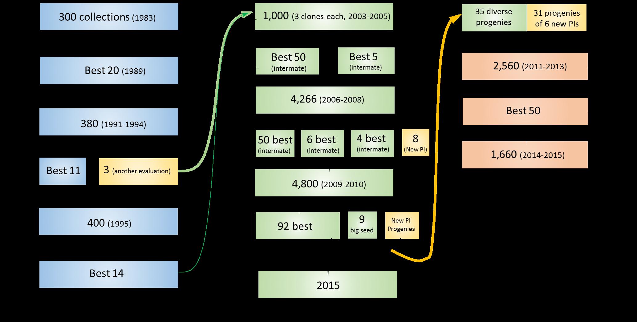 history of domestication of intermediate wheatgrass