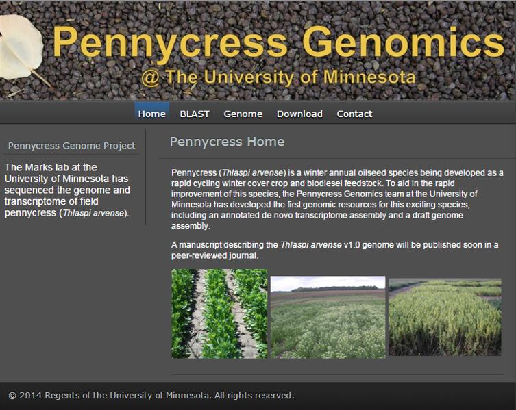 pennycress genomics website homepage