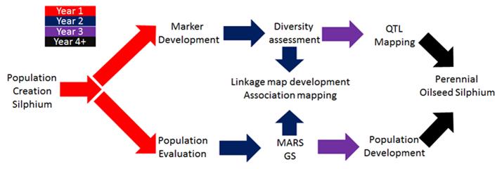 silphium breeding program schematic